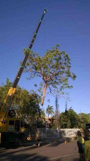 Using crane to remove tree