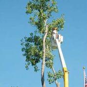 Wollongong Tree Service