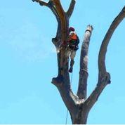Dingo's Tree Services