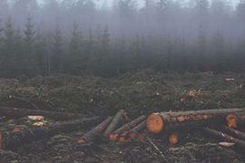 D.R. Tree Service