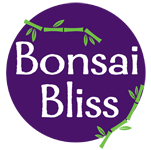 Bonsai Bliss