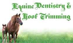 Brian S Grant Horse Dentistry & Farrier Service