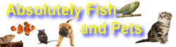 Absolutely Fish and Pets