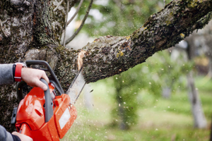 Paramount Arborist Services & Tree Removal Canberra
