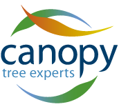 Canopy The Tree Experts