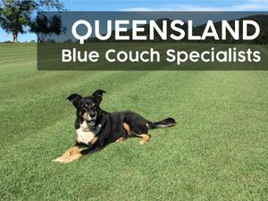 Queensland Blue Couch Specialists