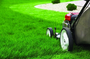 Matthew's Lawn Mowing Service